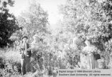 Unidentified individuals standing in an orchard