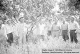 Men standing in orchard