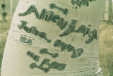 Engraving on Quaken Aspen tree