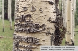Names carved in an aspen tree