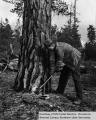 Ranger Grant G. Williams marking tree with an axe for cutting