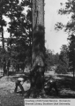 Timber in Coconino National Forest