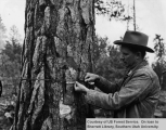 Ranger Williams Marks A Tree For Cutting