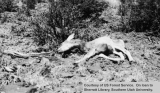 Wildlife management, dead fawn