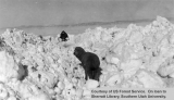 Emergency snow removal, sheep, 1949