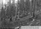 Brush piling on a lodgepole pine tie sale