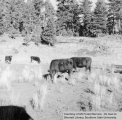 Trespass cattle owned by H. Hatch