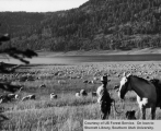 Sheep grazing at Navajo Lake