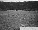Range studies of grazing areas, Bear Springs