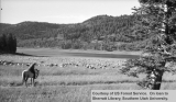 Sheep grazing around Navajo Lake with herder