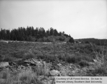 Range studies of grazing activities, East Fork
