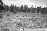 Range studies of grazing areas, East Fork