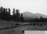 Effects of grazing, Coconino National Forest