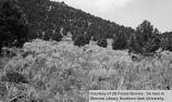 Silviculture, Pine Valley reseeding