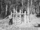 Silviculture, reproduction of aspen