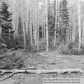 Logging, Forks Valley