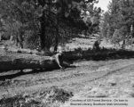 Logging, location unidentified