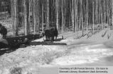 Logging, team of horses, location unidentified