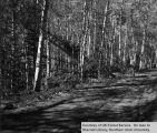 Logging roads, Big Rock Aspen sale