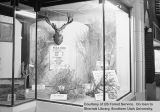 Exhibits -- Wildlife Window Display