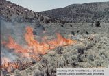 Events: Fires -- Bear Valley