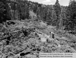 Right-of-way clearing, Panguitch Lake, Cedar Breaks road
