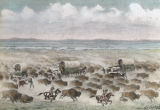Buffalo stampede in Platte Valley