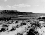 Desert scene, Washington County