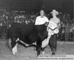 Steers, Reserve Champion, 1955