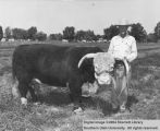 Bulls, Grand Champion Hereford, 1955