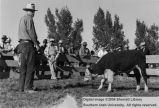 Calves, Grand Champion, 1940