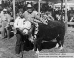 Steers, Grand Champion, 1947