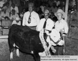 Steers, Grand Champion, 1948