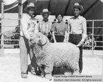 Rams, Grand Champion Rambouillet, 1956