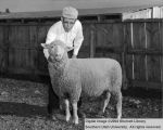 Rams, Grand Champion Suffolk, 1956