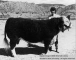 Cows, Grand Champion Hereford, 1960