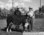 Steers, Grand Champion, 1950