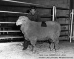 Sheep, Champion Columbia, 1961
