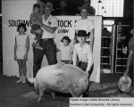 Hogs, Reserve Champion, 1962
