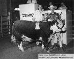 Steers, Reserve Grand Champion, 1962