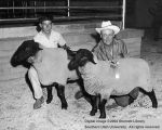 Sheep, Champion and Reserve Champion Suffolk, 1962