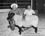Sheep, Champion Suffolk, 1962