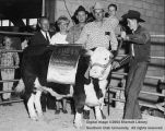 Steers, Grand Champion, 1964