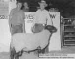 Rams, Grand Champion Suffolk, 1964