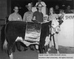 Steers, Grand Champion Hereford, 1965