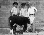 Calves, three young men and a calf