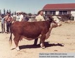 Cows, unidentified