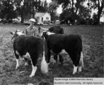 Calves, unidentified