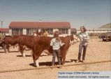 Steers, unidentified