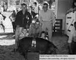 Hogs, Champion fat, 1953